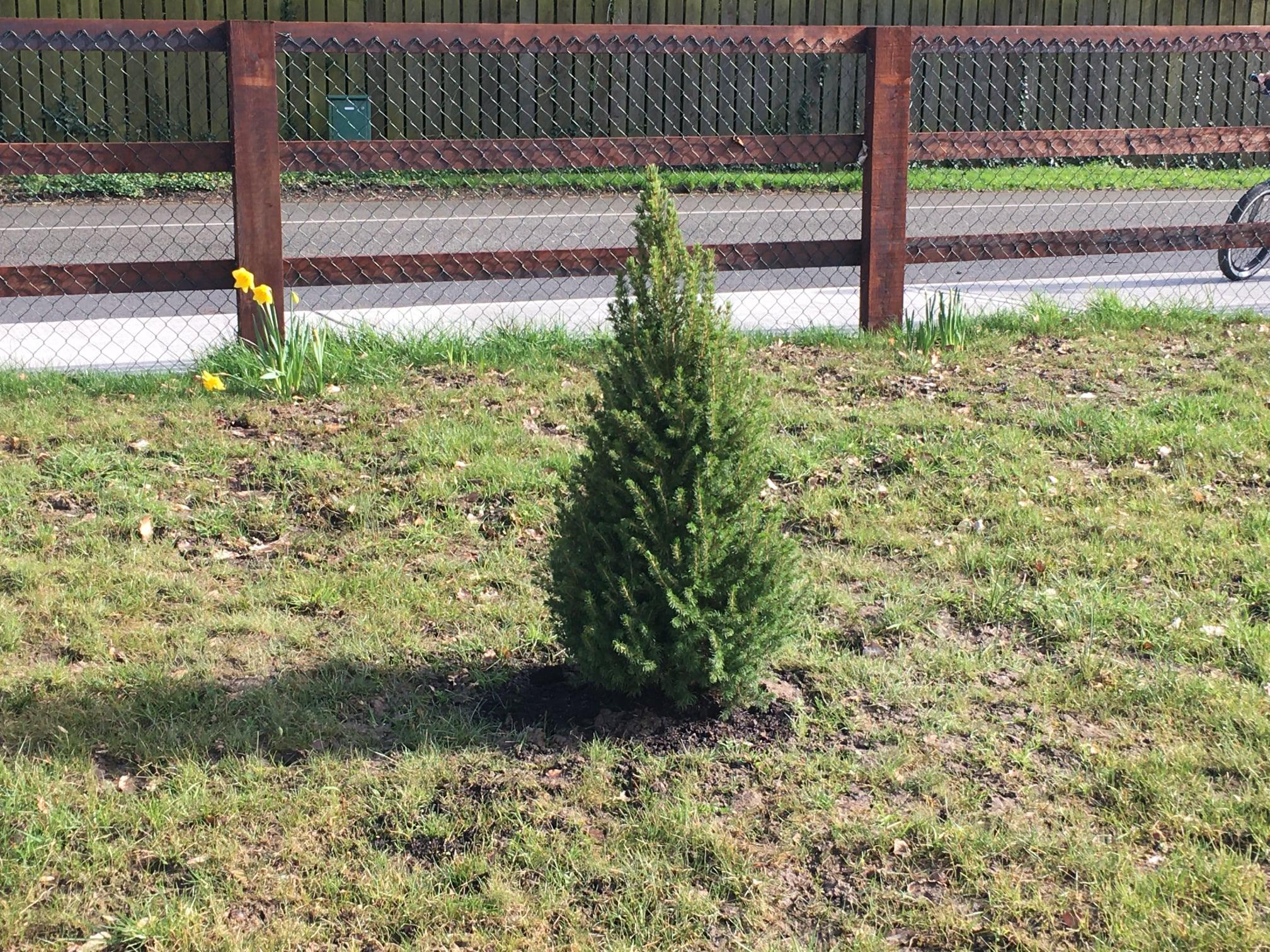 Christmas Tree Planted on Kilbride GAA Grounds – Come see!